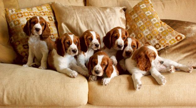 Pups on the settee